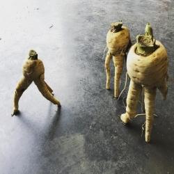 Je marchais déjà t'étais panais. #gerardmer #labresse #panais #jevoislavieenvosges #remiremont #hautesvosges #legumesbio #vosgesmountains #lacamionnettedesfermiers #onvouslivre #mangerlocal #artlegume #photosvosges #photolegumesdumarche